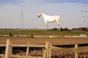 highhorse